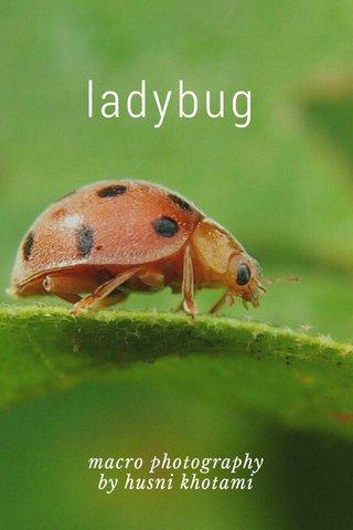 ladybug macro photography by husni khotami