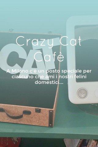 Crazy Cat Cafè A Milano c'è un posto speciale per ciascuno che ami i nostri felini domestici...