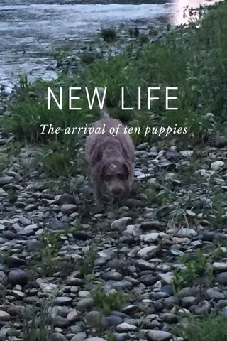 NEW LIFE The arrival of ten puppies