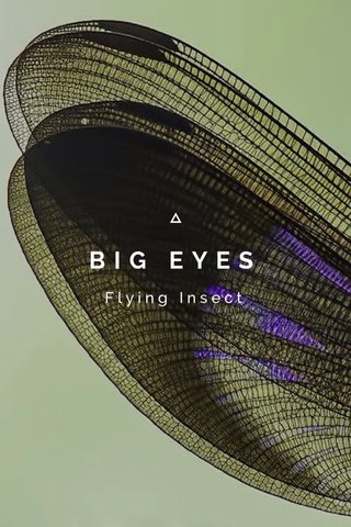 BIG EYES Flying Insect