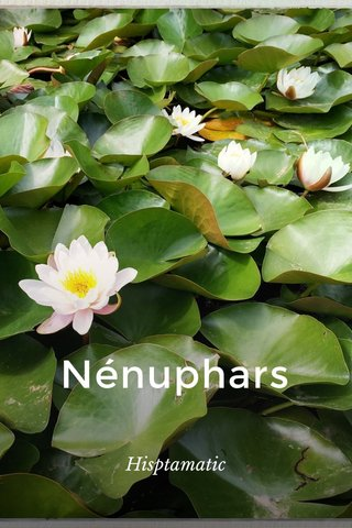 Nénuphars Hisptamatic