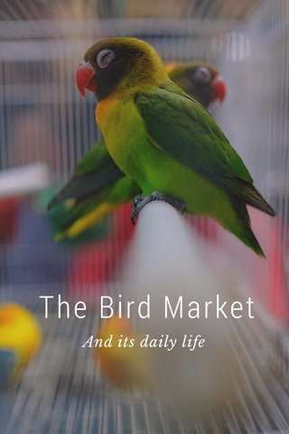 The Bird Market And its daily life