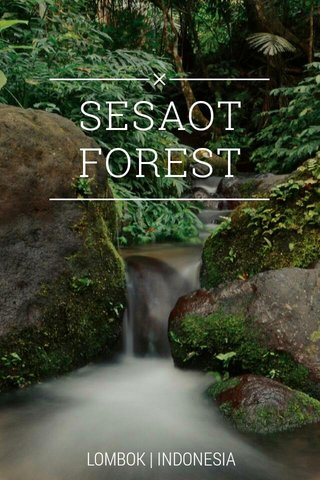 SESAOT FOREST LOMBOK   INDONESIA