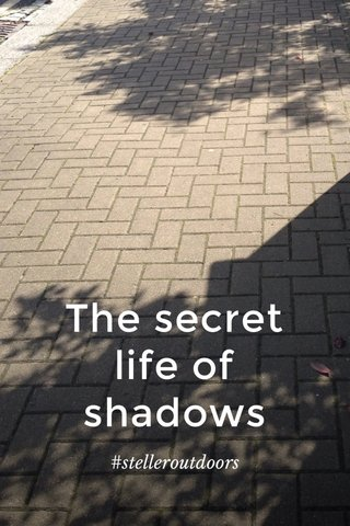 The secret life of shadows #stelleroutdoors