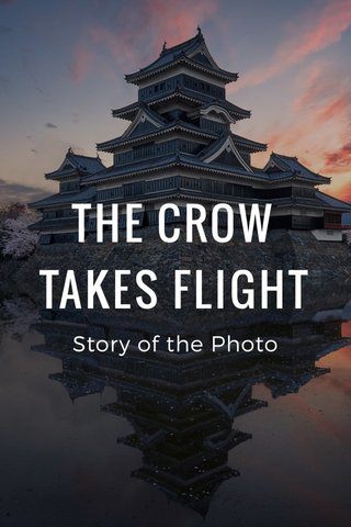 THE CROW TAKES FLIGHT Story of the Photo