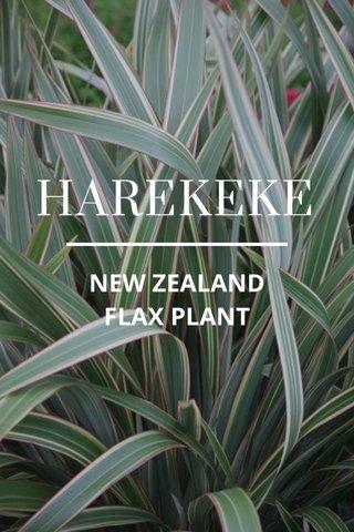 HAREKEKE NEW ZEALAND FLAX PLANT