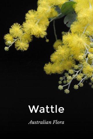 Wattle Australian Flora