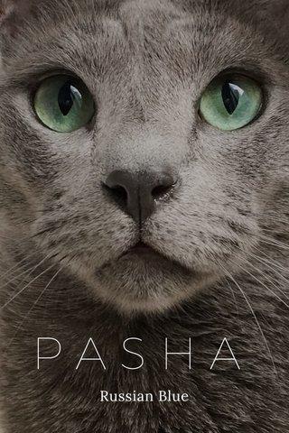 PASHA Russian Blue
