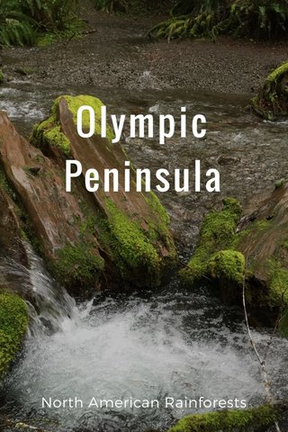 Olympic Peninsula North American Rainforests