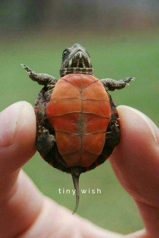 tiny wish