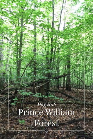 Prince William Forest May 2016
