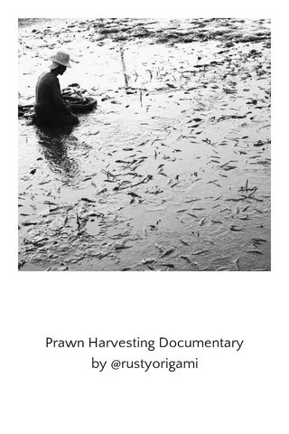 Prawn Harvesting Documentary by @rustyorigami
