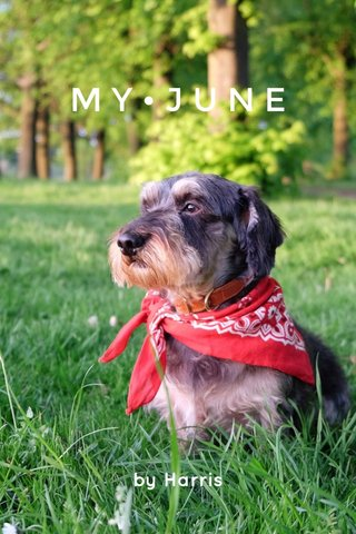 MY•JUNE by Harris