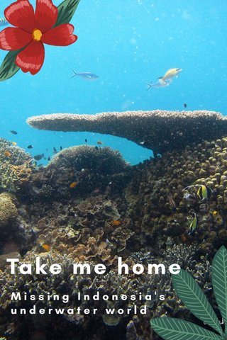Take me home Missing Indonesia's underwater world