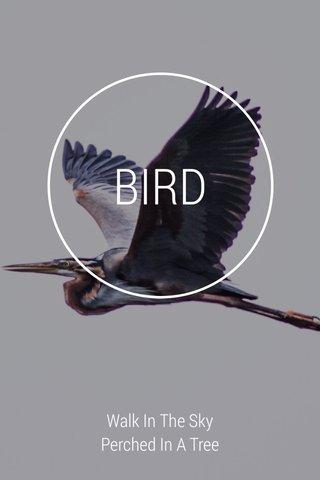 BIRD Walk In The Sky Perched In A Tree #birds