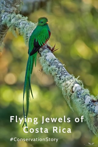 Flying Jewels of Costa Rica