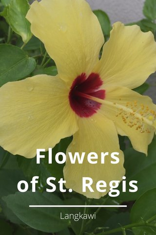 Flowers of St. Regis Langkawi
