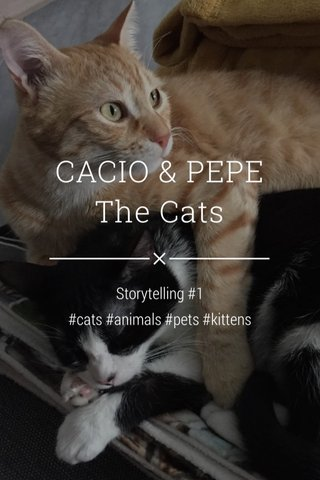 CACIO & PEPE The Cats Storytelling #1 #cats #animals #pets #kittens