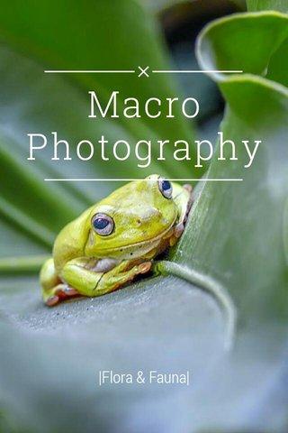 Macro Photography |Flora & Fauna|