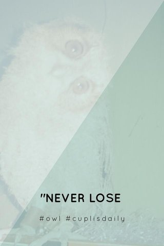 """NEVER LOSE HOPE"" #owl #cuplisdaily"