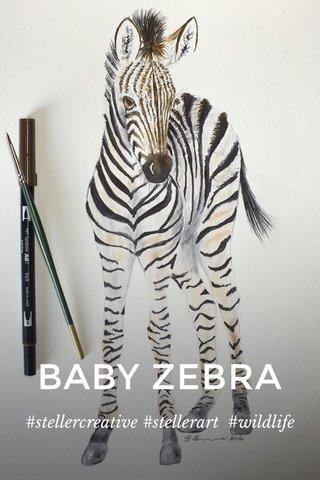 BABY ZEBRA #stellercreative #stellerart #wildlife
