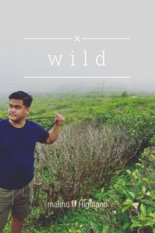wild malino🛡Highland