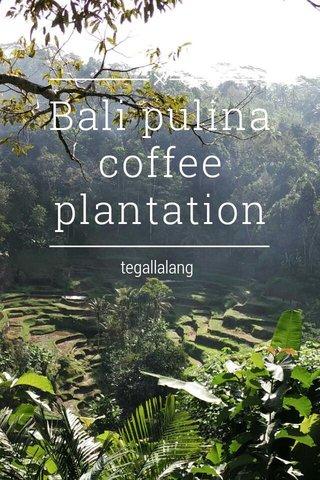 Bali pulina coffee plantation tegallalang