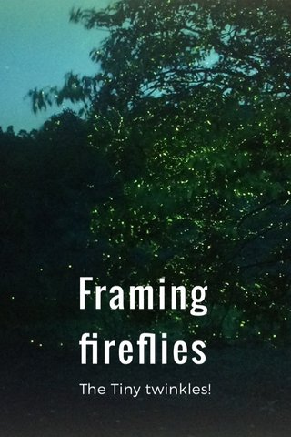 Framing fireflies The Tiny twinkles!