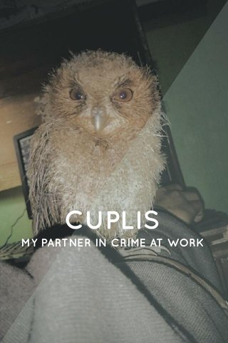 CUPLIS MY PARTNER IN CRIME AT WORK