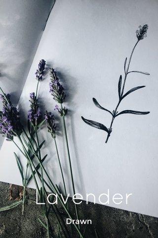 Lavender Drawn