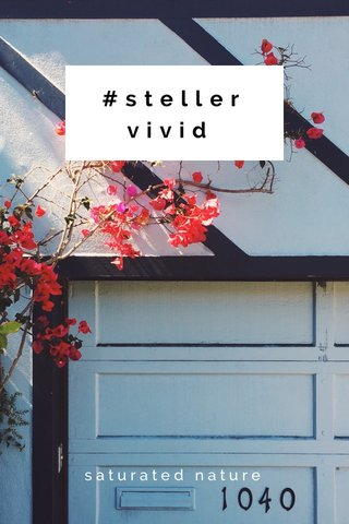 #stellervivid saturated nature