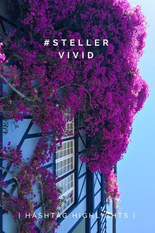 #STELLERVIVID | HASHTAG HIGHLIGHTS |