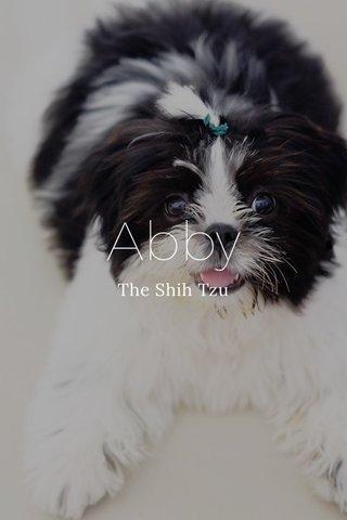 Abby The Shih Tzu