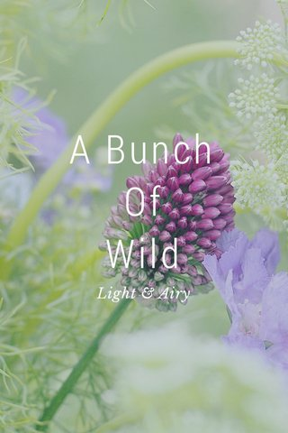 A Bunch Of Wild Light & Airy