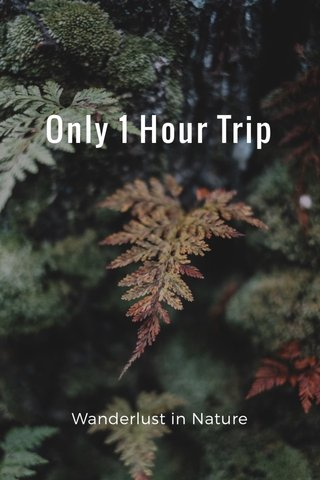 Only 1 Hour Trip Wanderlust in Nature