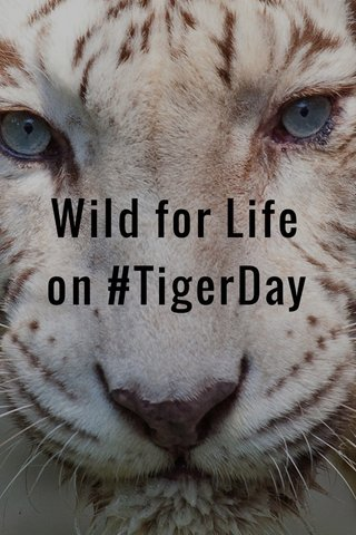 Wild for Life on #TigerDay