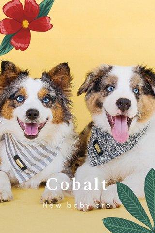 Cobalt New baby bro