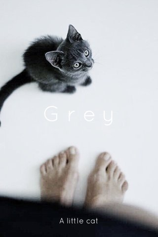 Grey A little cat