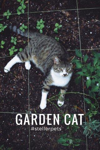 GARDEN CAT #stellerpets