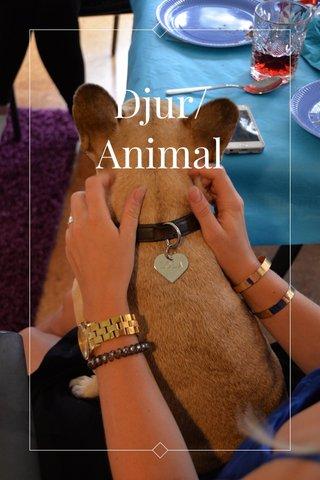 Djur/Animal