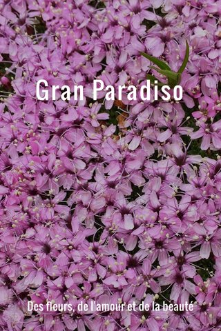 Gran Paradiso Des fleurs, de l'amour et de la beauté