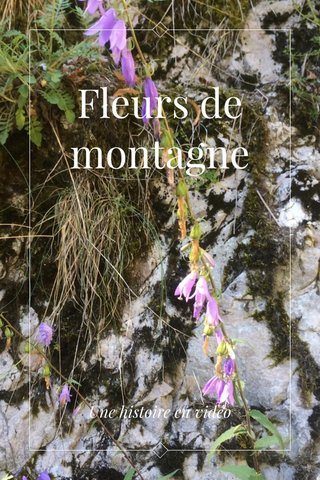 Fleurs de montagne Une histoire en vidéo