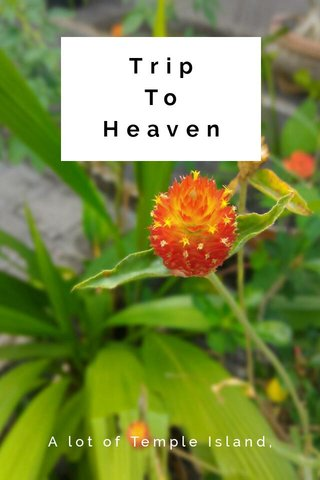 Trip To Heaven A lot of Temple Island, Bali
