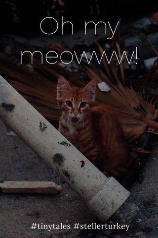 Oh my meowww! #tinytales #stellerturkey
