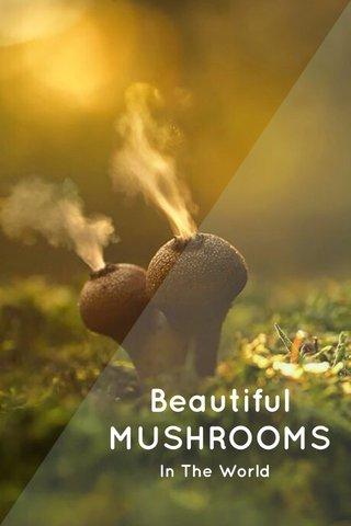 Beautiful MUSHROOMS In The World