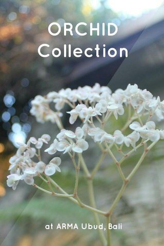 ORCHID Collection at ARMA Ubud, Bali