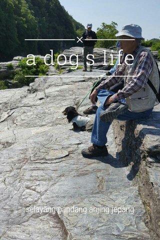 a dog's life selayang pandang anjing jepang