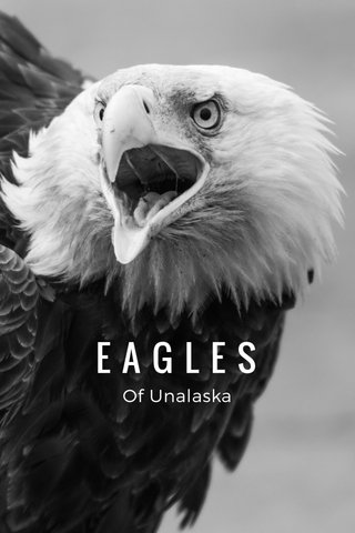 EAGLES Of Unalaska