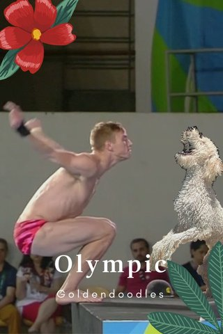 Olympic Goldendoodles