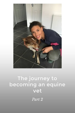 The journey to becoming an equine vet Part 2